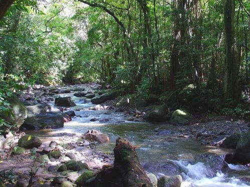 northern_forest_martinique_001